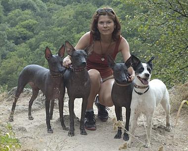 ксолоитцкуинтли (мексиканская голая собака) питомник